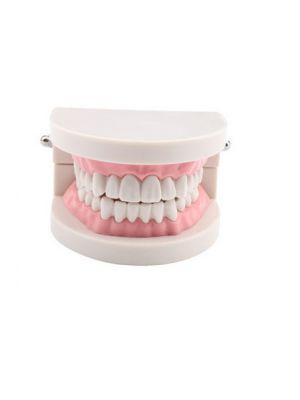 SuriDent Standard Dental Model